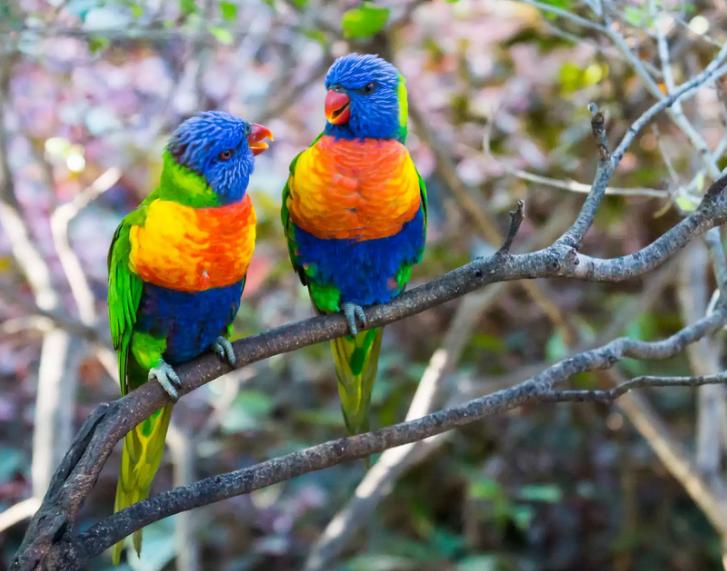 gambar-burung-berwarna-warni